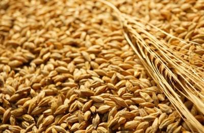 Сертифицирани семена LG от пшеница и ечемик сезон 2016-2017