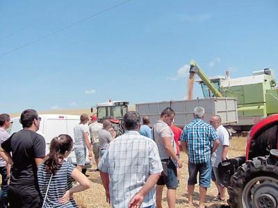 ПРОДАВАМЕ СЕМЕНА LG пшеница и ечемик сезон 2017